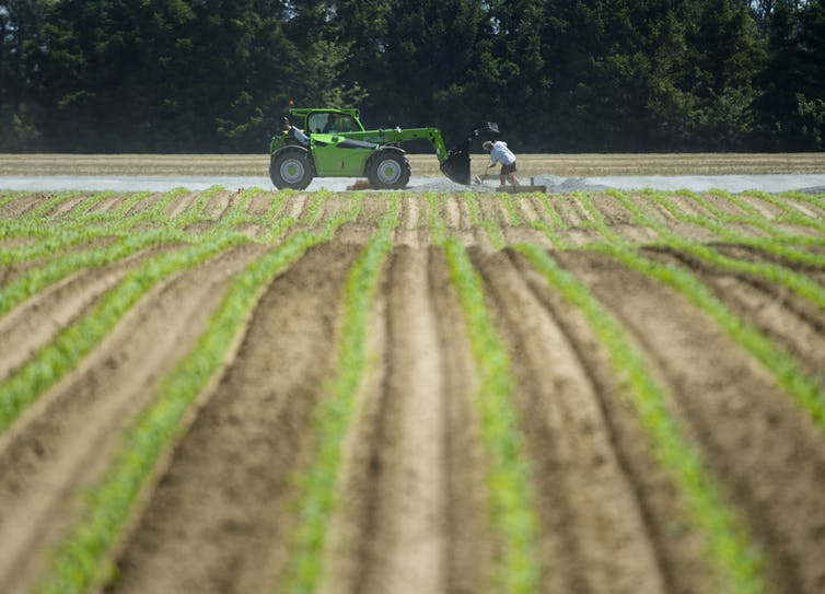 A man near a tractor in a farmer's field.