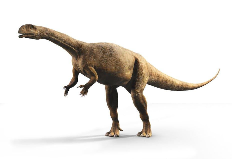 A news species of dinosaur standing.