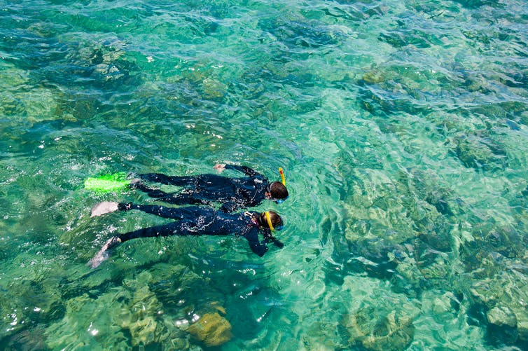 Two snorkelers