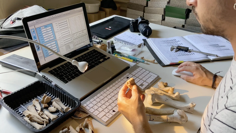 Zooarchaeologist logs data about bones.