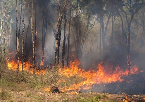 A bushfire.