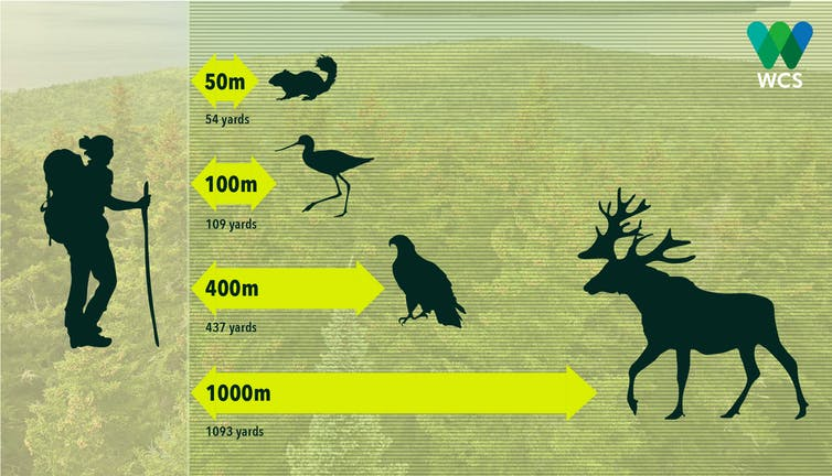 Graphic showing distances at which human presence affects animals' behavior.