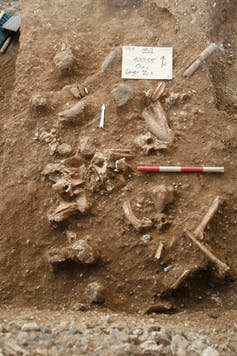 _Homo_ who? A new mystery human species has been discovered in Israel