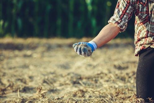 man wearing glove holds soil