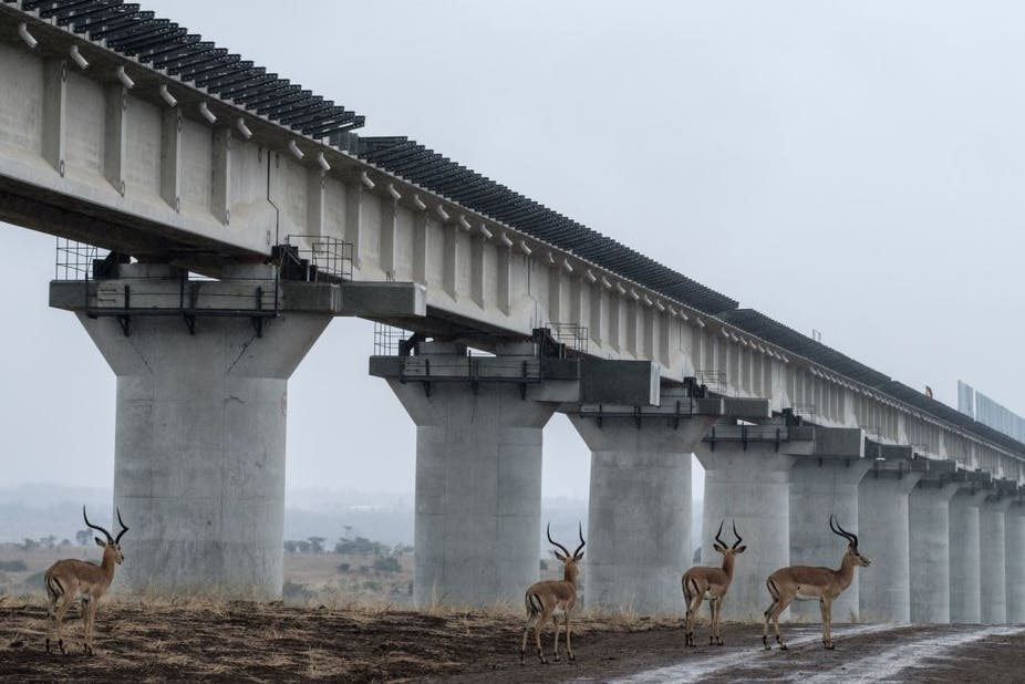 Impalas walk near the elevated railway that allows movement of animals below the tracks at the construction site of Standard Gauge Railway