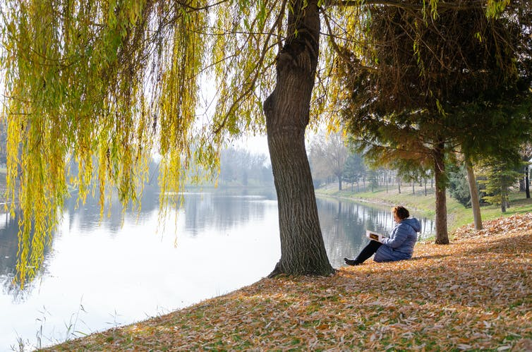 woman reading under a tree
