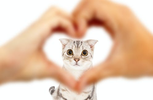 human hands in a heart shape in front of a cat
