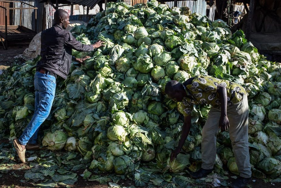 Two men piling cabbages in a heap on the street