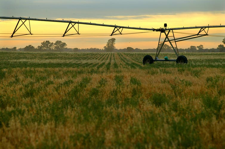 Crop with farm machinery