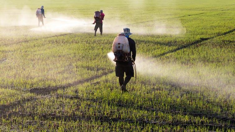 people spray field
