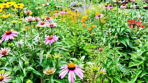 A colourful backyard pollinator garden