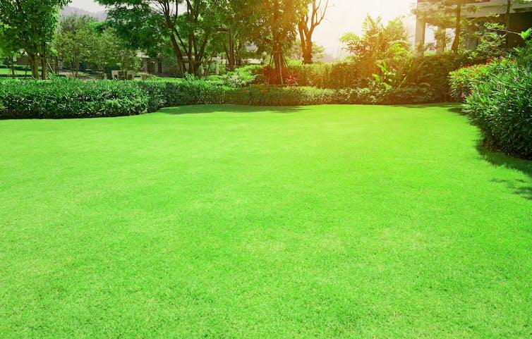 A bright green lawn