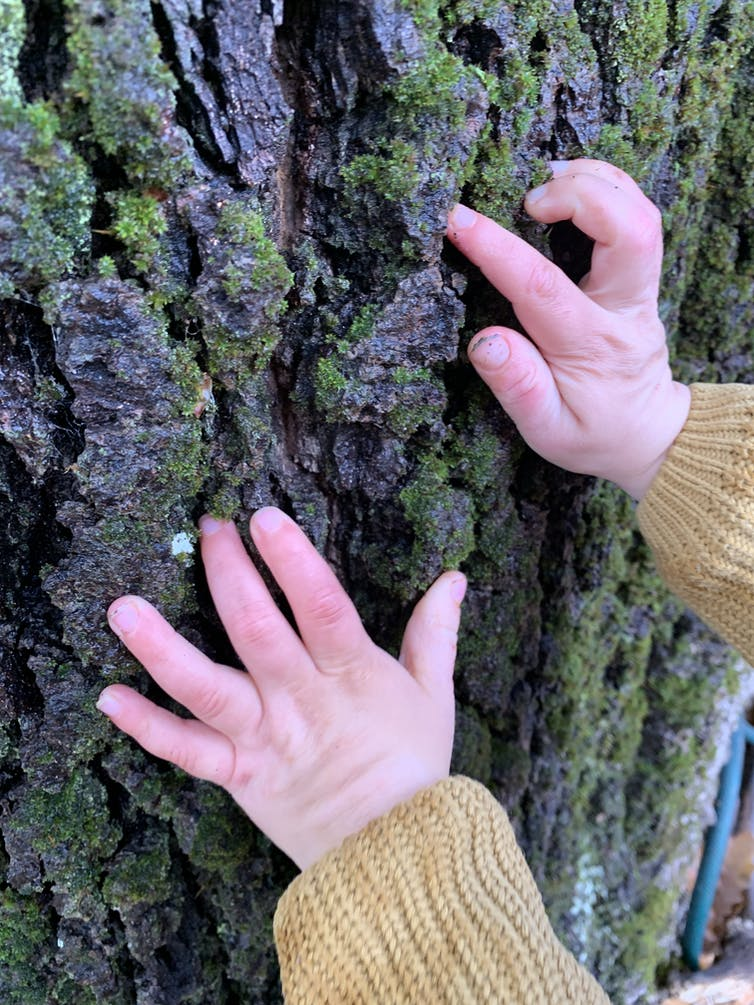Child's hand touching bark of a tree trunk.
