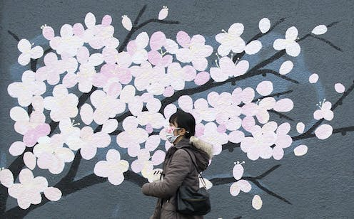 A woman wearing a face mask walks past a mural depicting pink cherry blossoms.
