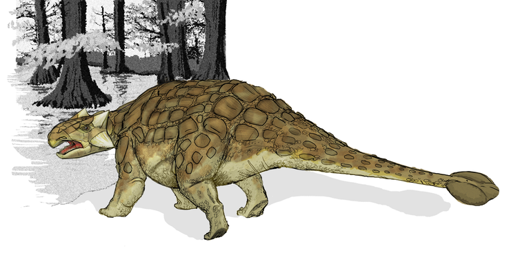 Low-slung four-legged dinosaur with beaklike mouth and club on end of tail.