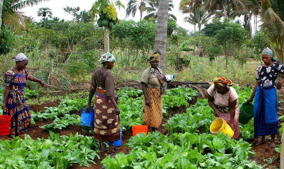 Women stand in a vegetable garden, carrying buckets of water