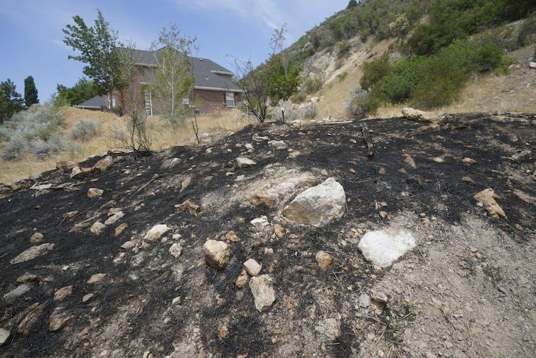 Burned ground on a hillside adjacent to homes.