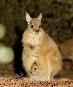 Mala with baby in pouch
