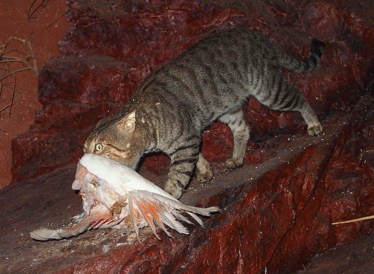 feral cat holds dead bird