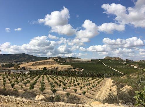 Terreno cultivado con un viñedo en primer plano