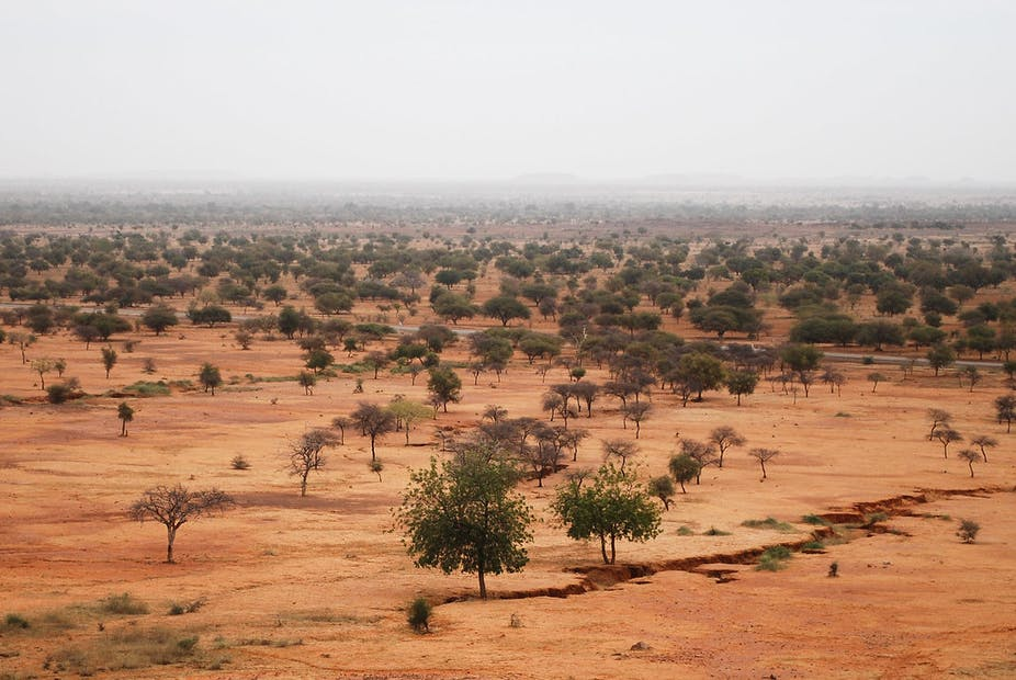 Dry landscape with some trees