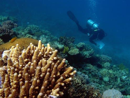 Scientist surveys coral near Lizard Island