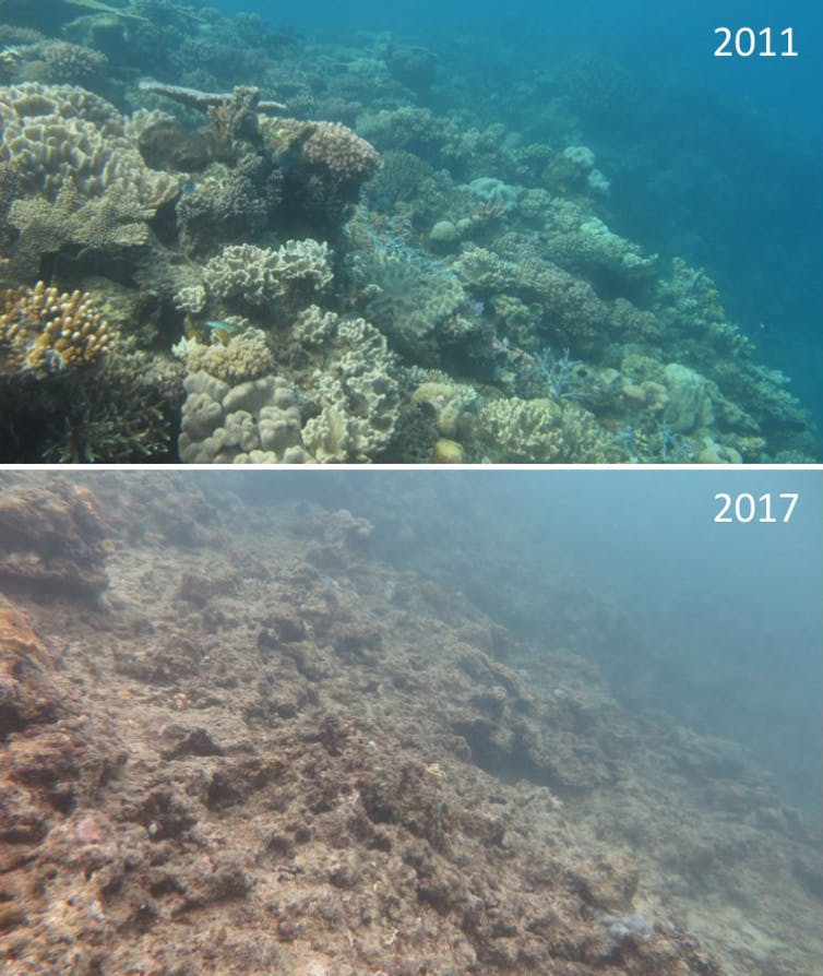 Healthy coral near Lizard Island in 2011, top, then six years later after two bleaching events, bottom.