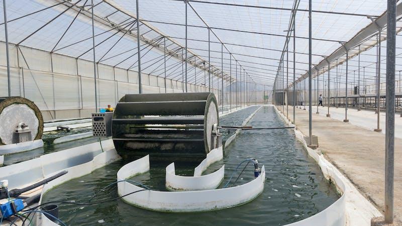 Depuradoras de microalgas: ahorran energía, absorben CO2 y producen fertilizantes sostenibles