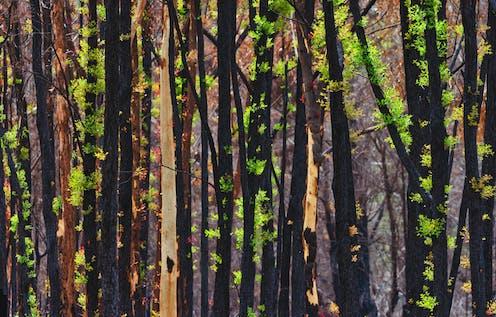 Regenerating trees