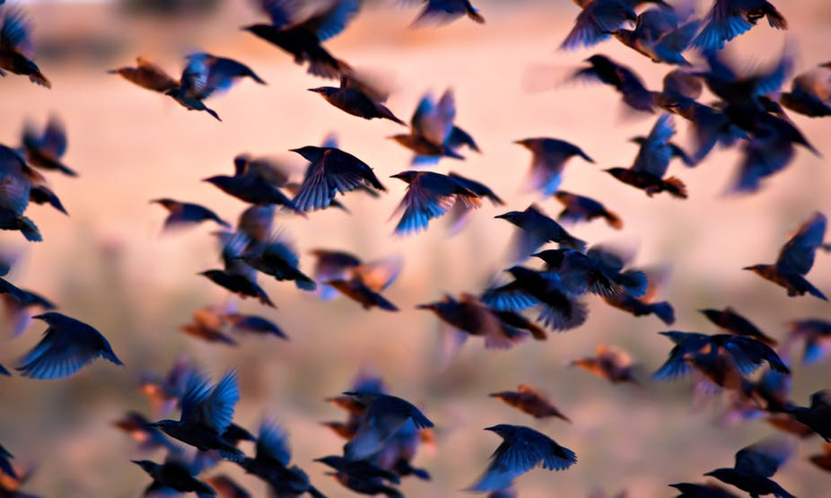 Birds flying in the air.