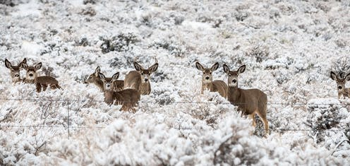 Deer at Oregon's Warner Wetlands alert to human presence