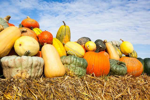Pile of pumpkins against blue sky.