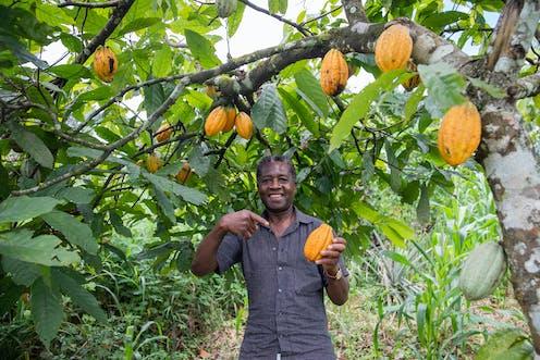 Un homme tient dans sa main une fève de cacao