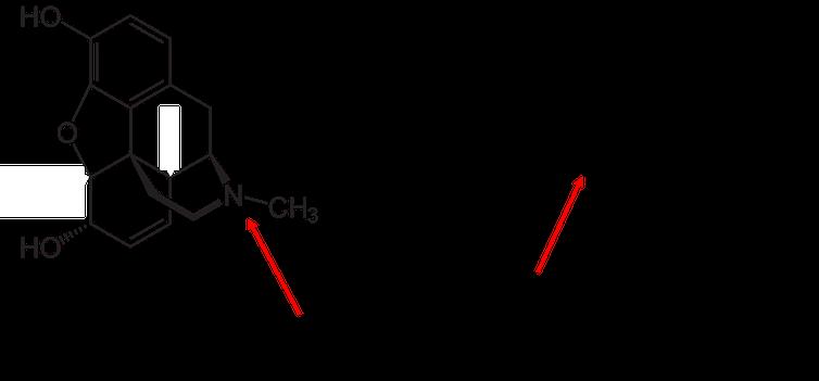 โครงสร้างทางเคมีของมอร์ฟีนและเฟนทานิล