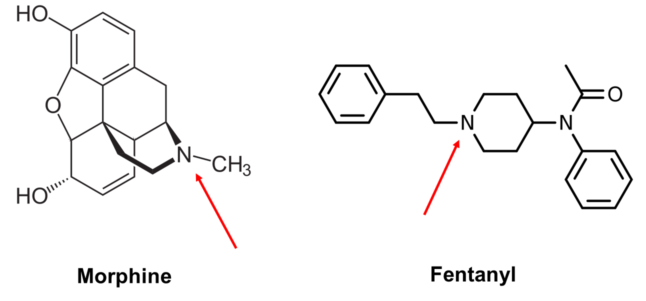 Chemical structures of morphine and fentanyl