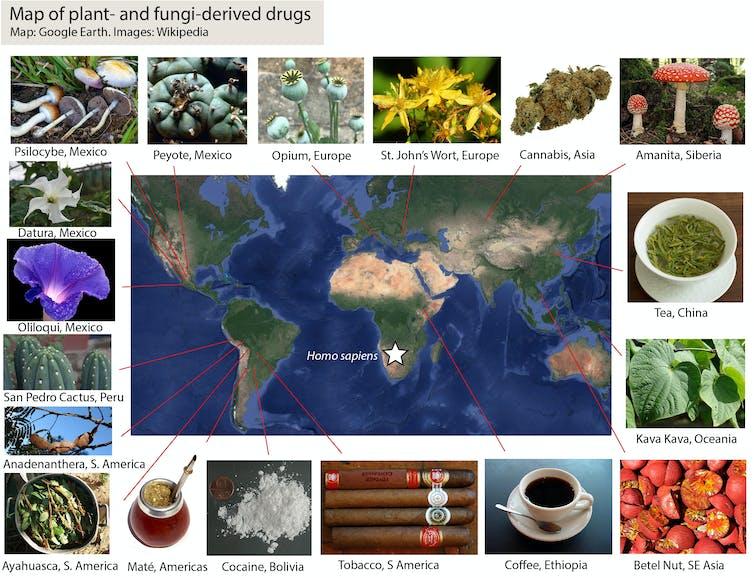 Un mapa que muestra dónde se originaron las diferentes drogas.