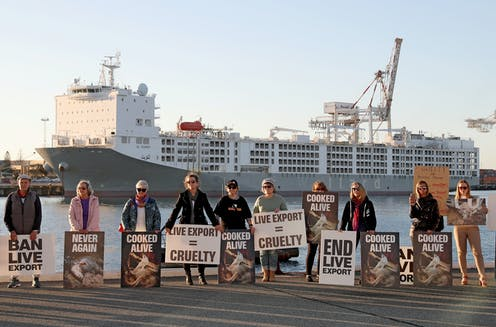 Animal welfare protesters rally in front of the Al Kuwait live export ship as sheep are loaded in Fremantle harbour