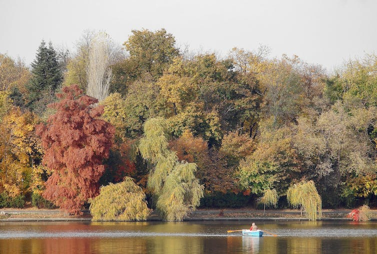 Trees in autumn line the bank of a river
