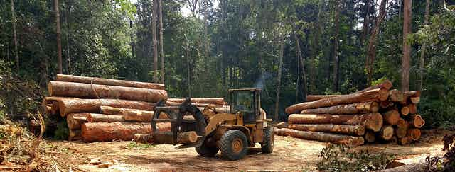 tractor moves logs in Brazilian forest