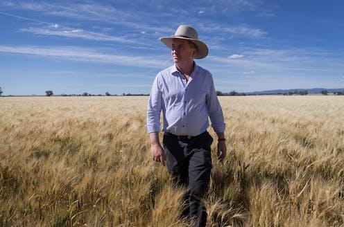 man walks through wheat field
