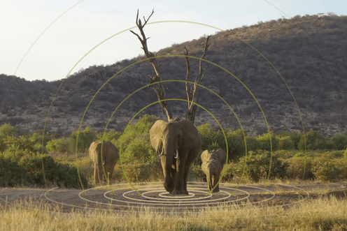Three African elephants in a grassland with sound waves spreading out from one elephant.