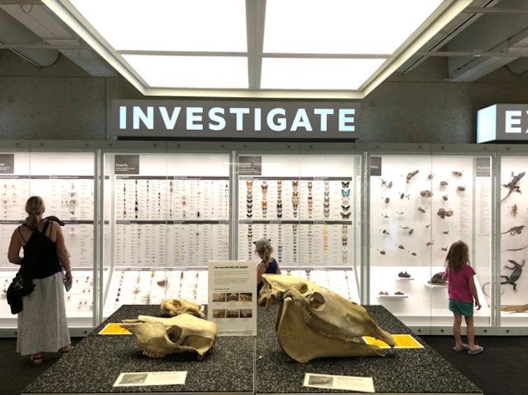 A natural history display
