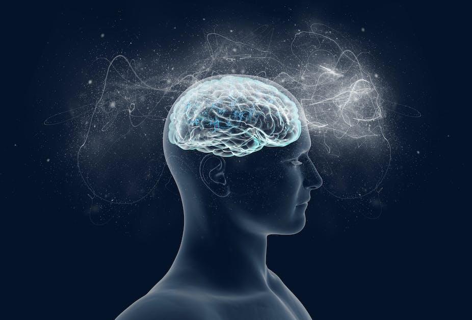 An illustration of a human brain