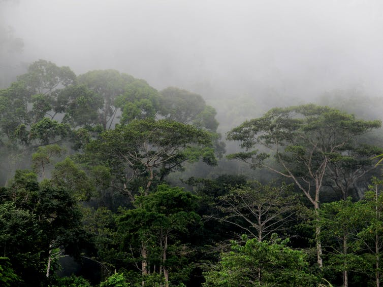 Hill forests in Borneo (Indonesia)