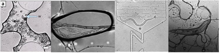 Four panels showing different soil microorganisms