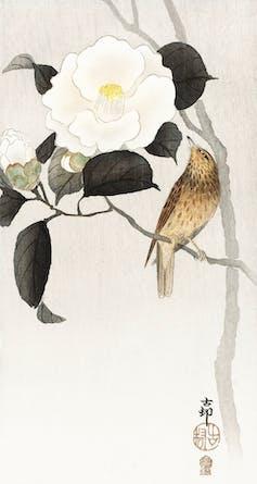 Peinture japonaise montrant un rossignol près d'une fleur de camélia