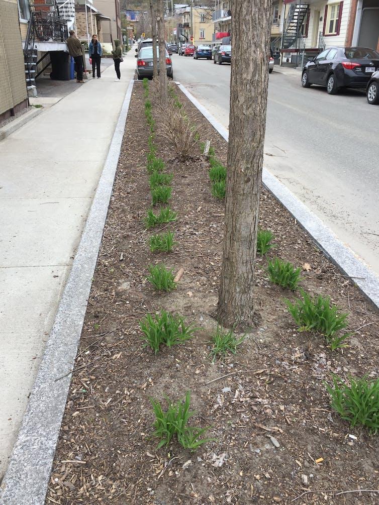 une bande de terre avec des plantations dans une rue en ville