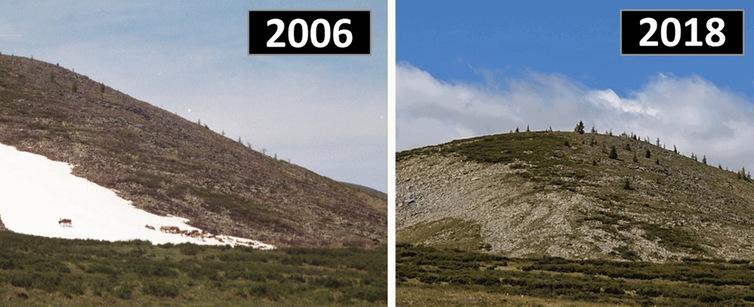 reindeer on a patch of white ice in 2006, contrasted with the same hillside with no ice at all in 2018