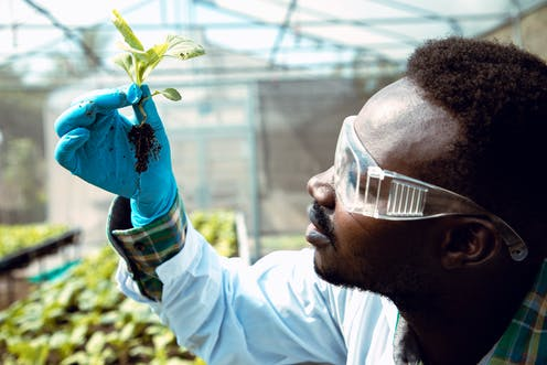 Research and development are key to resilient food systems in Africa