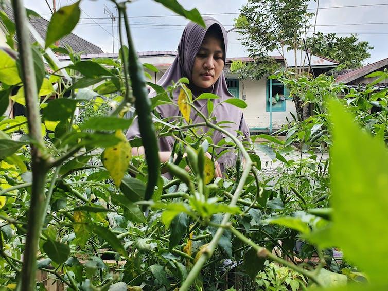 Muslim woman tends to garden